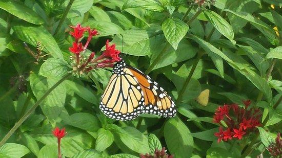 Botanica: The Wichita Gardens: butterfly exhibit