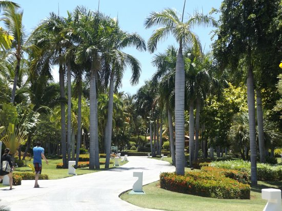 Paradisus Punta Cana Resort: Palm Trees