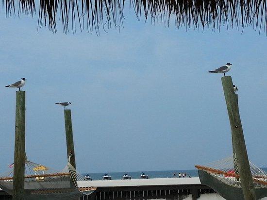 Sirata Beach Resort: Beach from dining area