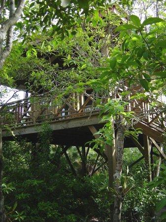 Hamanasi Adventure and Dive Resort: Hamanasi Treehouse!