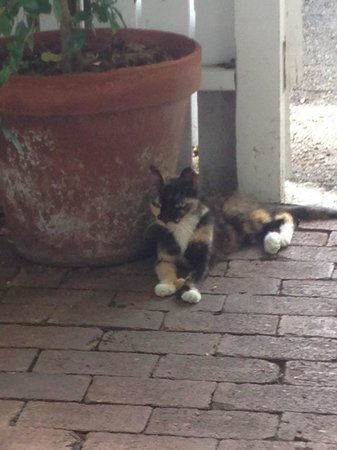 Andrews Inn and Garden Cottages : One of the cats from the Hemingway House