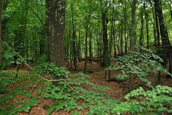 Slottsskogen : Den lumna skogen i slottskogen