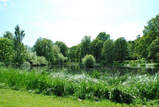 Slottsskogen : Fågeldammen
