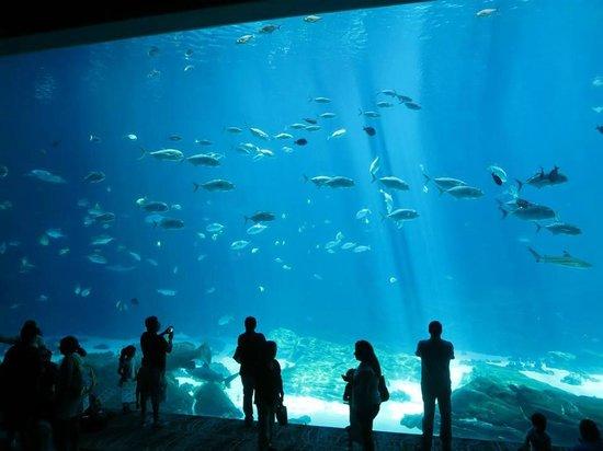 Georgia Aquarium: GA Aquarium