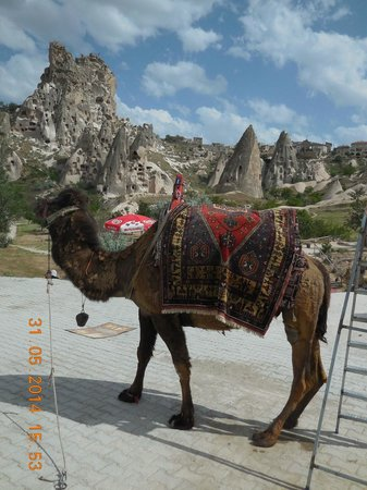 Uchisar Castle : with a camel