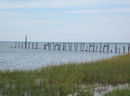 St. Marks National Wildlife Refuge: Pelicans