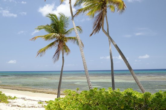 The Palms at Pelican Cove: PALMS