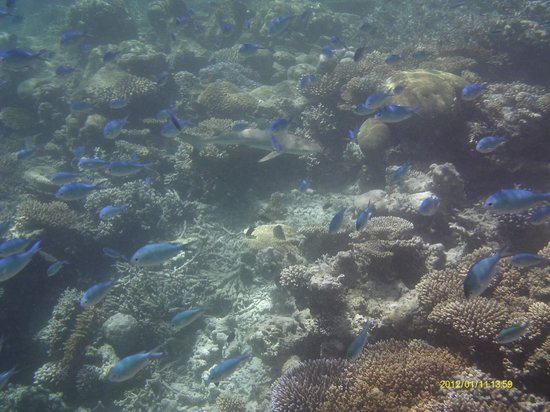 Vilamendhoo Island Resort & Spa: Can you see the shark lurking?