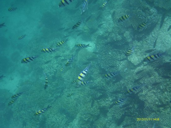 Vilamendhoo Island Resort & Spa: Fish
