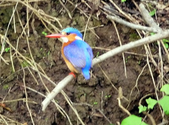 Hlosi Game Lodge: Kingfisher