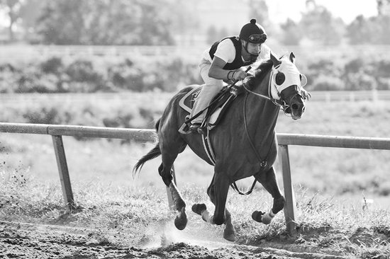 The Thoroughbred Center : Breezing