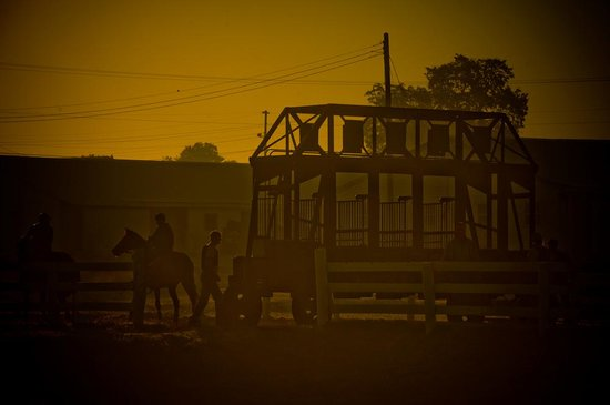 The Thoroughbred Center : Starting Gate used for Training