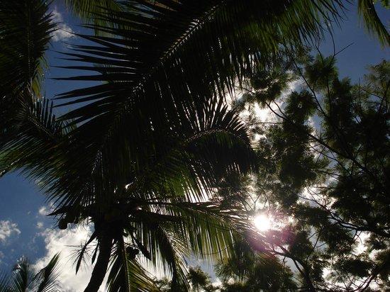 Orangea Village: Palme