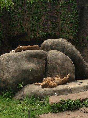 Lincoln Park Zoo : Lincoln Zoo