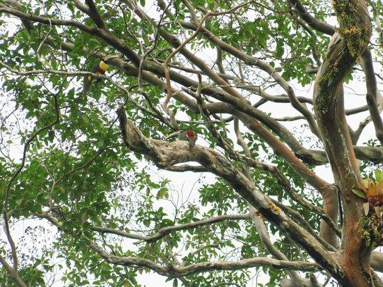 Muyuna Amazon Lodge : aves en su hábitat