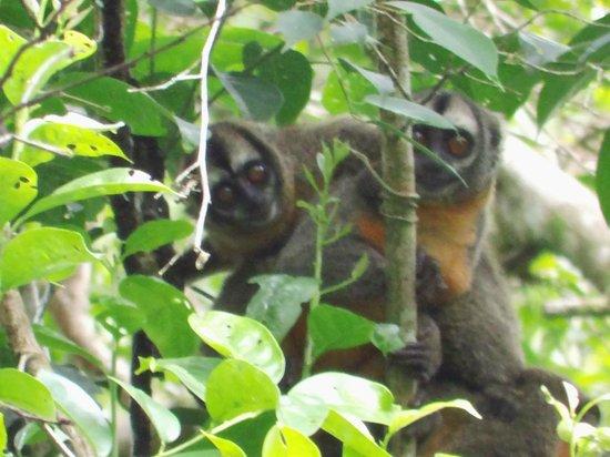 Muyuna Amazon Lodge : monos en su hábitat natural