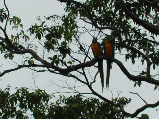 Muyuna Amazon Lodge : aves en su habitat natural