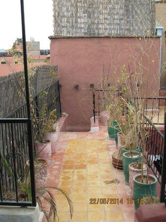 Riad Tarik : Rooftop with dead pot plants !