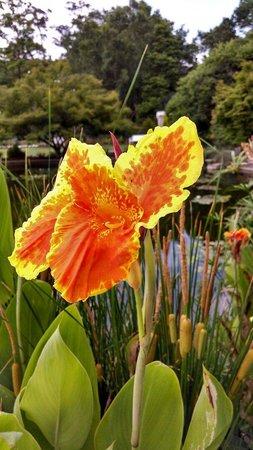 New Hanover County Arboretum: Flower's in the garden