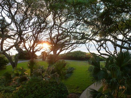 The Beachview Club : ocean sunrise through a lace of beautiful trees