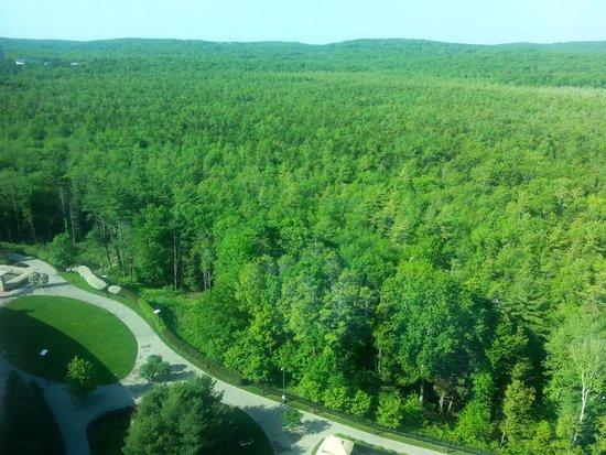Foxwoods Resort Casino : Beautiful view from Foxwoods hotel room