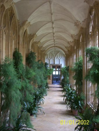 Forde Abbey & Gardens: Stunning mini-cloister, now a conservatory
