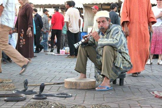 Jemaa el Fna : Encantadores de serpientes