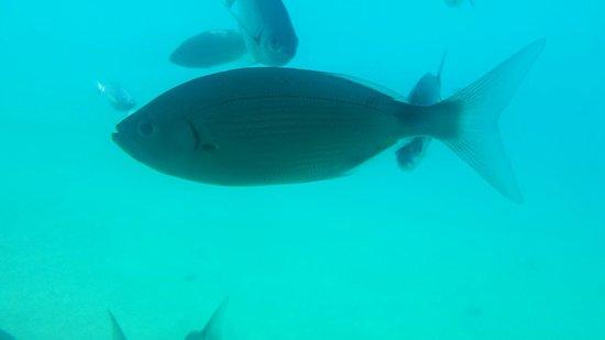 Isla de Benidorm (L'illa de Benidorm): Submarine trip