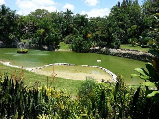 Pinecrest Gardens: La laguna