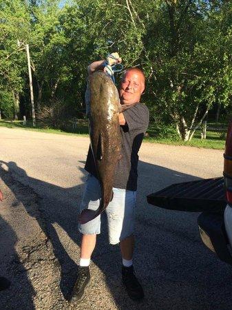 River Bay Campground & Marina : Huge Catfish caught at River Bay