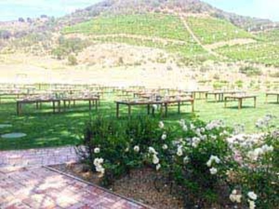 Agoura Hills, Καλιφόρνια: The grass lawn at Triunfo Creek Vineyards.