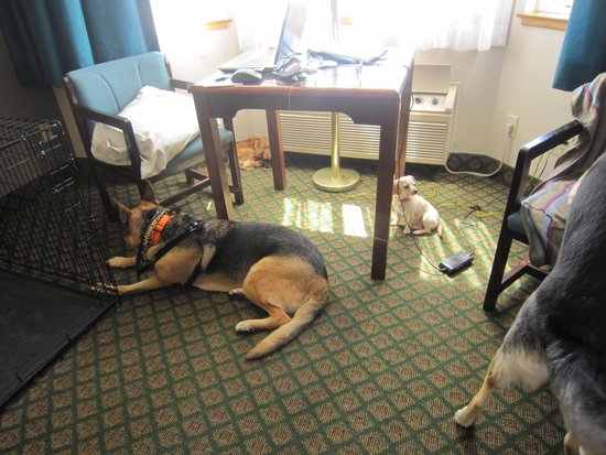Anchor Beach Inn : My dogs in the room