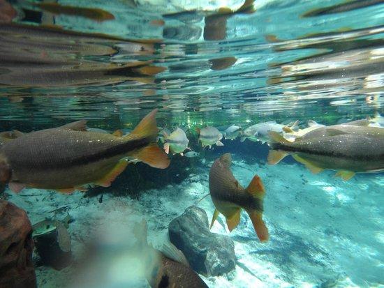 Nobres, MT: aquário encantado
