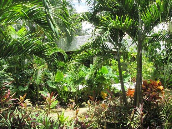 Hacienda Pavoreal: en la naturaleza