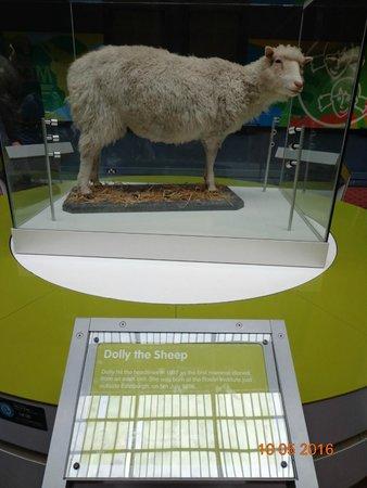 Museo Nacional de Escocia: Dolly!
