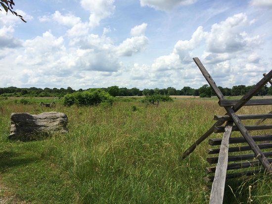 Stones River National Battlefield: Bread Basket