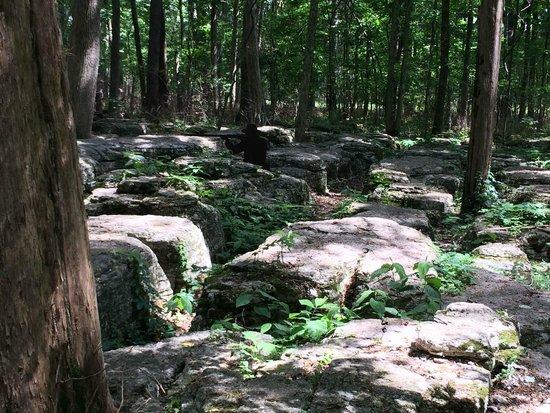 Stones River National Battlefield: Slaughter Pen