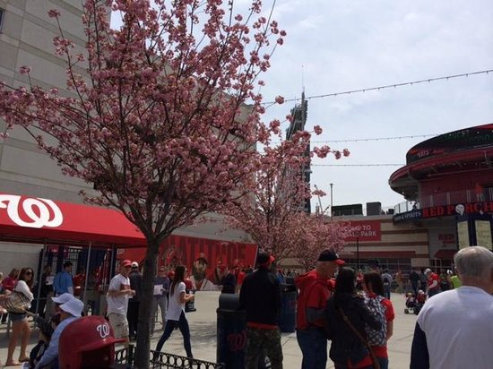 Nationals Park: Cherry blossoms at the entrance