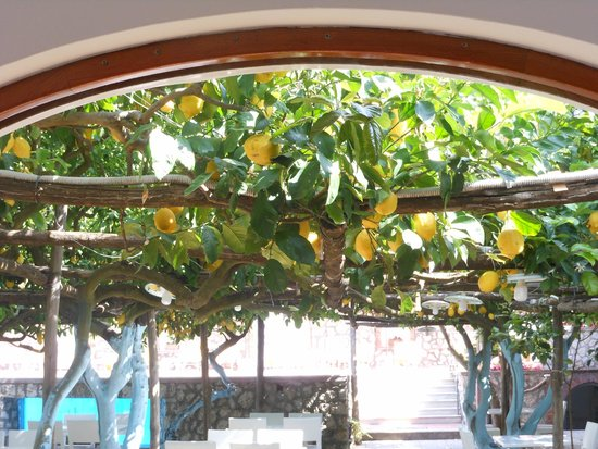 Hotel Syrene, BW Premier Collection: Lemon grove between hotel and swimming pool