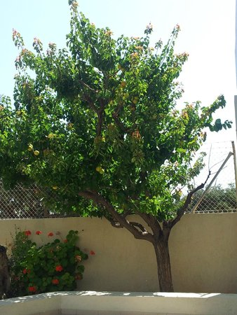 Ourania Apartments & Hotel: Trees around the rooms!!!