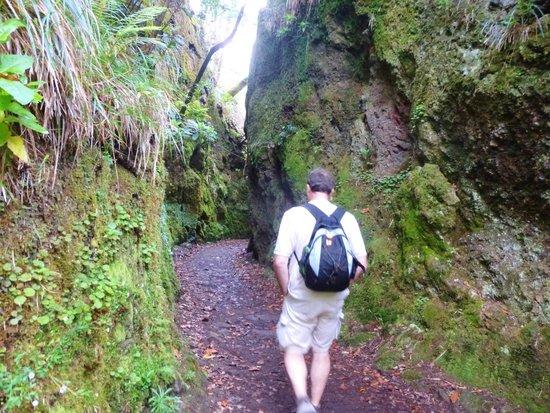 Laurissilva Forest: Balcoes levada walk