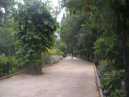 Jardin Jnan Sbil : More trees