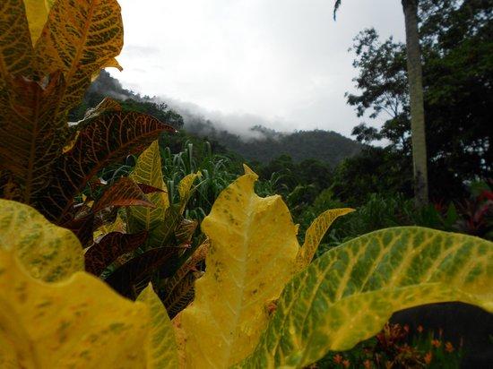 Villas Pico Bonito : simply amazing