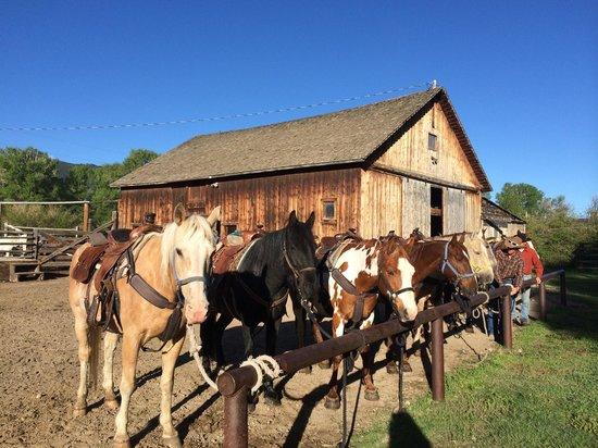 Vee Bar Guest Ranch: Barn