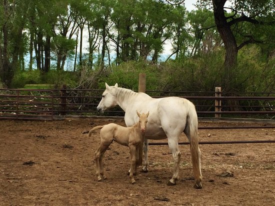 Vee Bar Guest Ranch: A foal born just days before I arrived