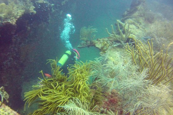 Blue Island DIvers : the wreck dive Kennedy