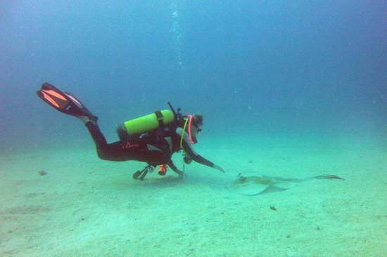 Blue Island DIvers : play with the sting ray