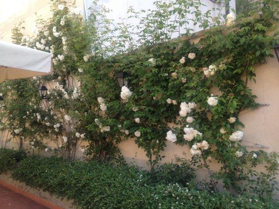 Hotel Orto De Medici : Garden