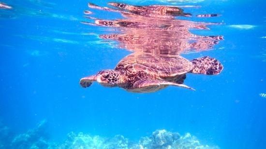 Hike Maui : Neat sea turtle experience!