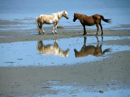Assateague Beach : The beauty of the island.